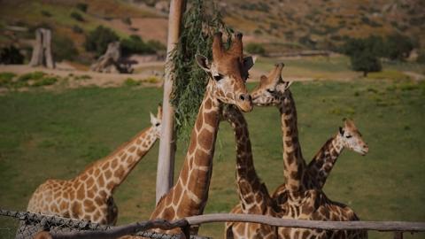 Safari Park Wedding